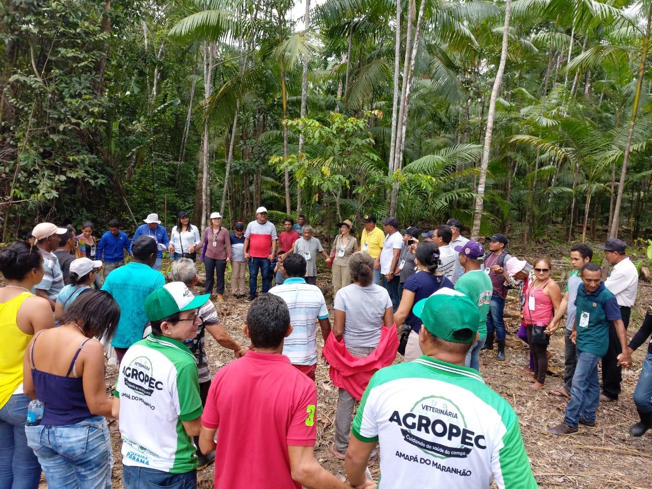 Amapá do Maranhão discute manejo de açaizais nativos em Dia de Campo